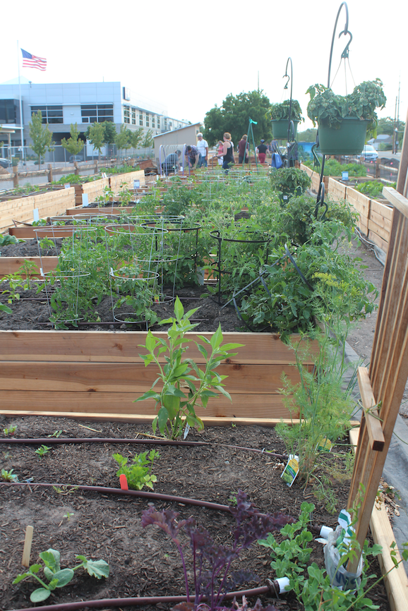Wasatch Community Gardens | Salt Lake City, Utah - 2018 Urban Garden ...