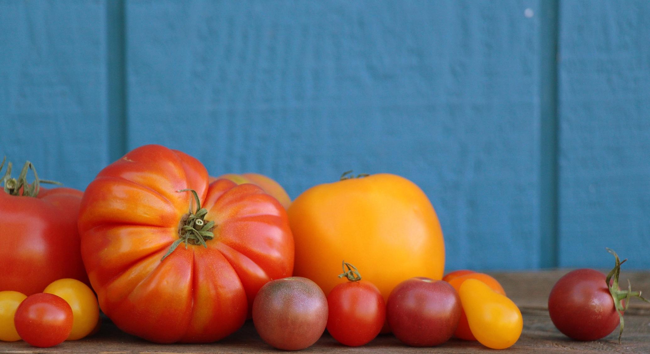 Tomatoes-2_resized