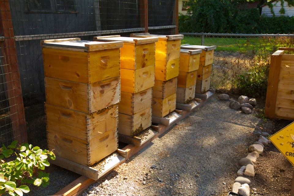 Urban Garden Co beehives