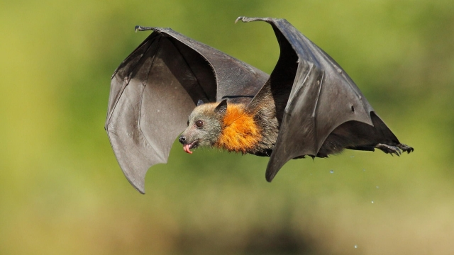 cute flying bat