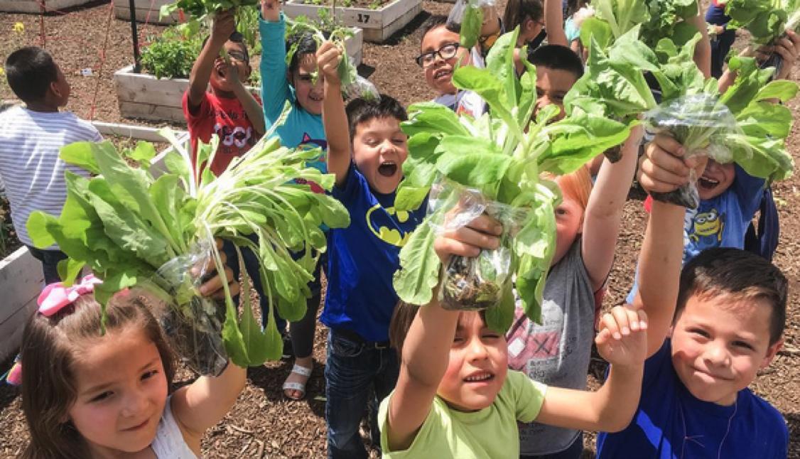 How to Start a School Garden
