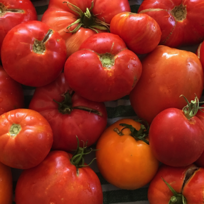 10 Heirloom Tomato Recipes…