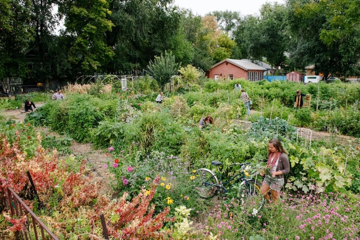 photo da tomato farm vegetable stock lat depositphotos safe garden