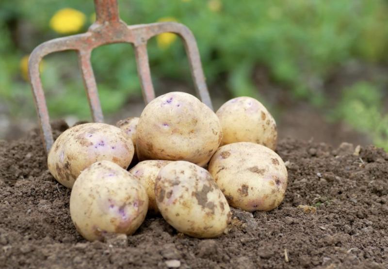 "Potatoes: ""How-To"" Video"