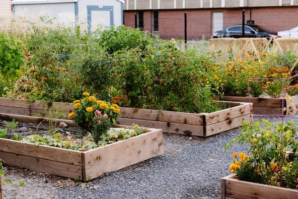 Wasatch Community Gardens | Salt Lake City, Utah - Container Gardening