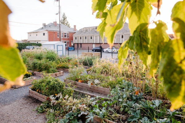 Off-Broadway Community Garden