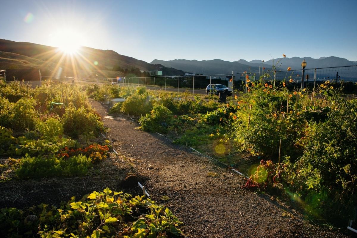 Wasatch Community Gardens   Salt Lake City, Utah - Popperton Plots ...