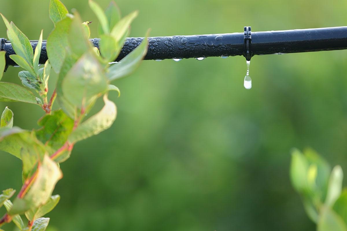 drip irrigation design for vegetable garden drip irrigation design for vegetable garden how to set up - Garden Sprinkler Design